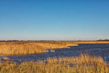 Natuurgebied, water en winter riet  sur Bram van Broekhoven