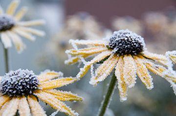 Bloemen in ijs van