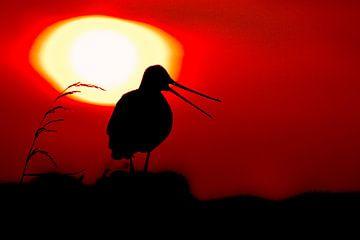 Rufende Uferschnepfe mit untergehender Sonne von Beschermingswerk voor aan uw muur
