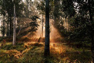 Sonnenaufgang im Leeuwarder Bos von Nando Foto