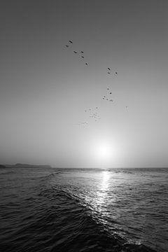 Möwenschwarm im Sonnenuntergang von Felix Kammerlander