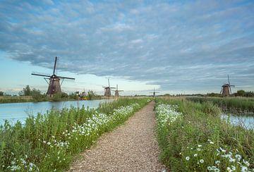 Bloemenpracht molens Kinderdijk. van Adrian Visser