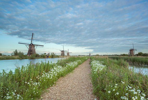 Bloemenpracht molens Kinderdijk.