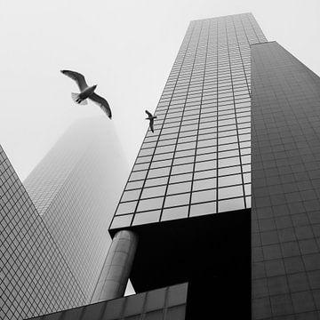 La tour de Rotterdam sur Peter Schmidt