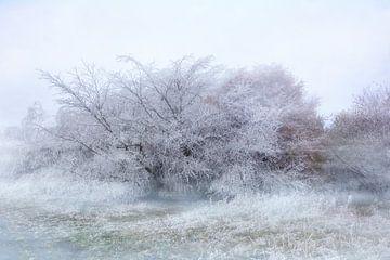 Winterzeit von Claudia Evans
