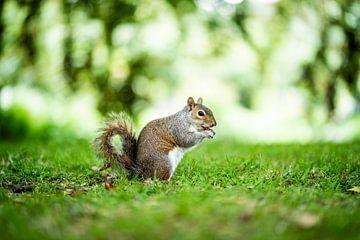 Eichhörnchen in Grün von Thijs van Beusekom