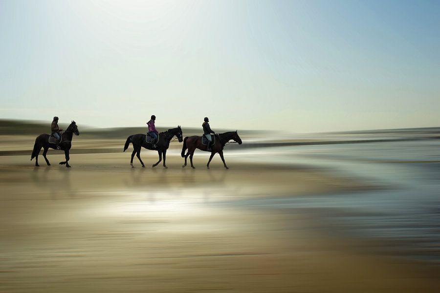 Horses at the beach