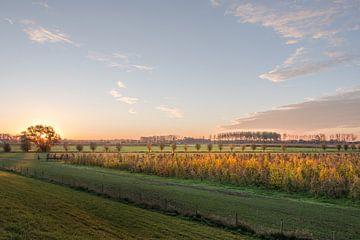 Mooi licht op fruitboomgaard von Moetwil en van Dijk - Fotografie