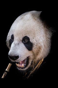 Panda portret van Jessica Blokland van Diën