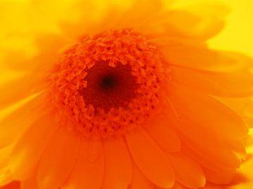Ontluikende bloem van Marjanne van der Linden
