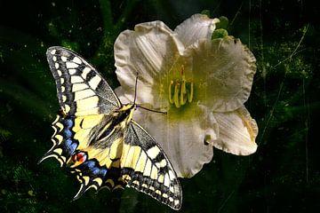 Schmetterling auf Lilienblüte von Christine Nöhmeier