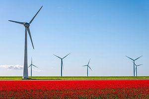 Rode tulpen met windturbines in de achtergrond