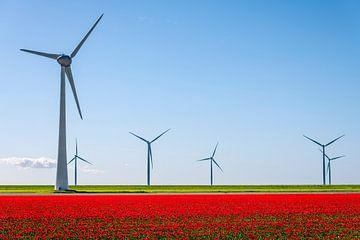 Rode tulpen met windturbines in de achtergrond van Sjoerd van der Wal