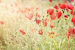 Poppies I van Christa van Gend