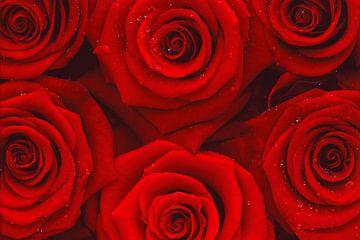 zee van rozen van Stefan Böhme