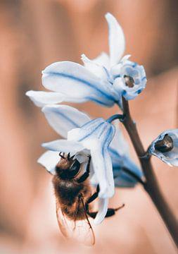 Een bij snoept van een bloem van Nannie van der Wal