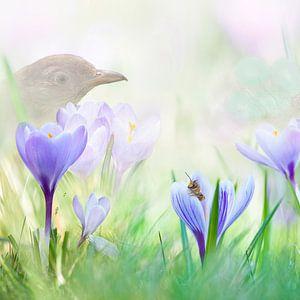 Lente met paarse krokus van