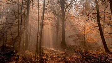Der Speulder Märchenwald von Mike Bot PhotographS