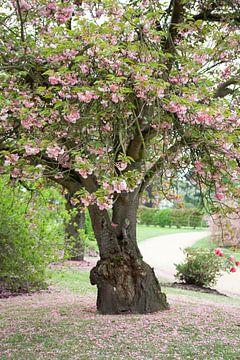 roze boom van marijke servaes