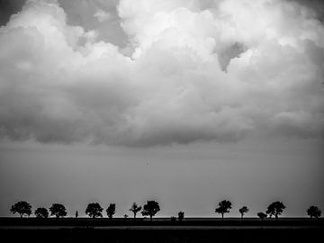 Bäume in einer Reihe von Martijn Tilroe