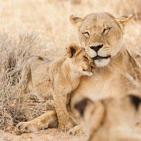 Moederleeuw met welp in Botswana van Simone Janssen