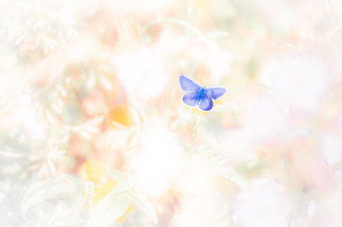 Icarusblauwtje warmt zich op in de kruidenrijke vegetatie.