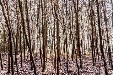 Door de bomen het bos niet meer zien von Willy Sybesma