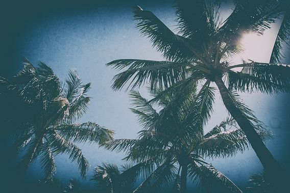 Palmbomen in Miami