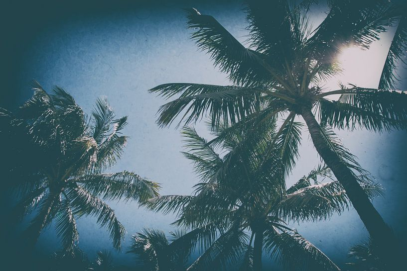 Palmbomen in Miami van Aiji Kley