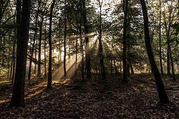 Zonnestralen tussen de bomen von MICHEL WETTSTEIN