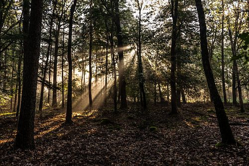 Zonnestralen tussen de bomen