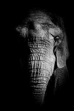 Afrikaanse olifant in zwart wit close up van Mr. Djb