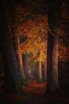 Whispering leaves van Saskia Dingemans