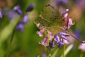 Blaadje op wilde Hyacinten van