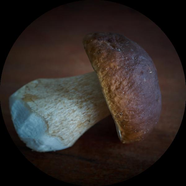 vers verzamelde eekhoorntjesbrood uit het bos van Heiko Kueverling