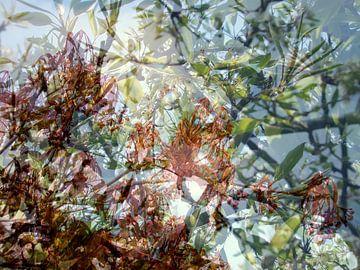 Frühling von Anita Snik-Broeken