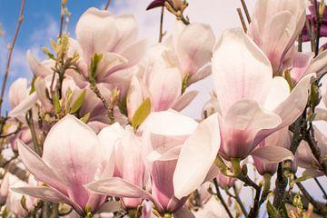 Magnolia van Ettie van der Meulen-Vermaning