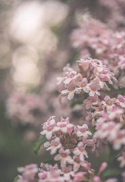 Blumen Teil 134 von Tania Perneel