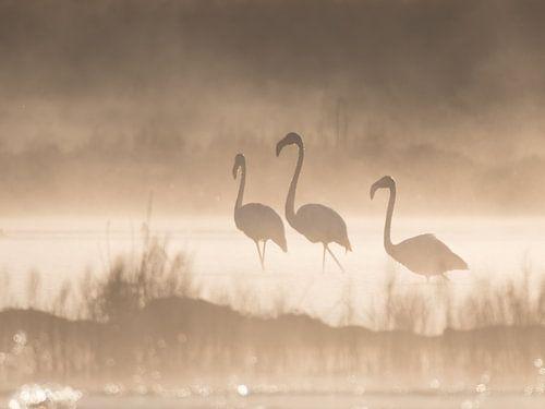 Flamingos im Nebel mit Hintergrundbeleuchtung. von Bert Snijder
