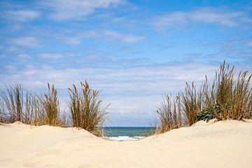 To the beach (Vers la plage)