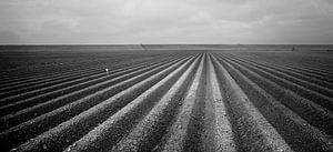 Aardappel voren in het polderlandschap van de provincie Groningen