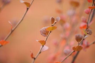 Herbstrot von Johanna Kool