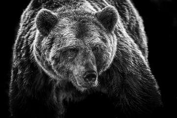 Close-up van bruine beer in zwart wit van