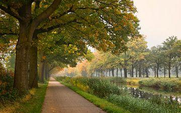 Baumreihe am Morgen von Sran Vld Fotografie