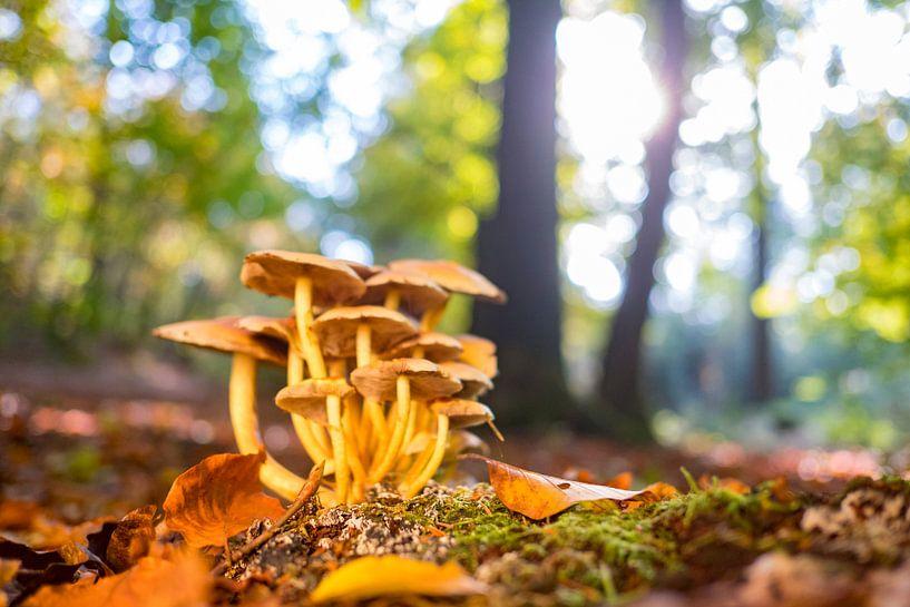 Paddestoelen in het bos tijdens een mooie herfstdag van Sjoerd van der Wal