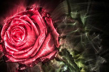 Kirlian Feldaufnahme einer Rose in Nahaufnahme von MPfoto71