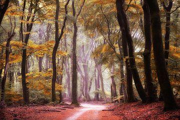 Autumn forest sur Elly Besselink