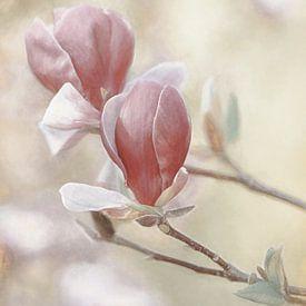 Magnolia sur Lars van de Goor