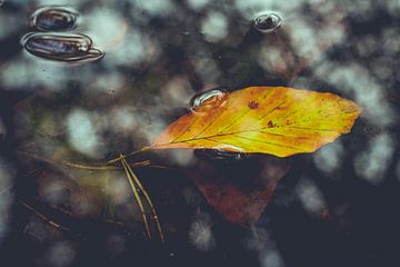 Blaadje in water herfst tinten van Maarten Mooijman