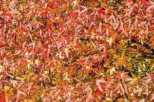 Amberbladeren van